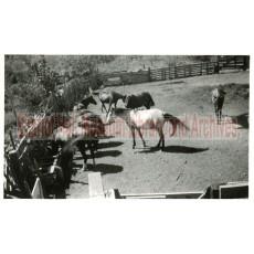 Horses at Orchard Ranch