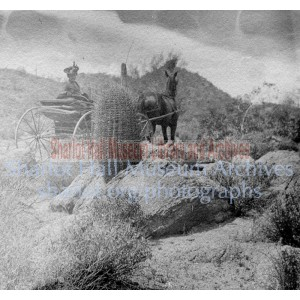 Sharlot Hall in carriage before barrel cactus